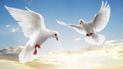 burung-jelatik-terbang